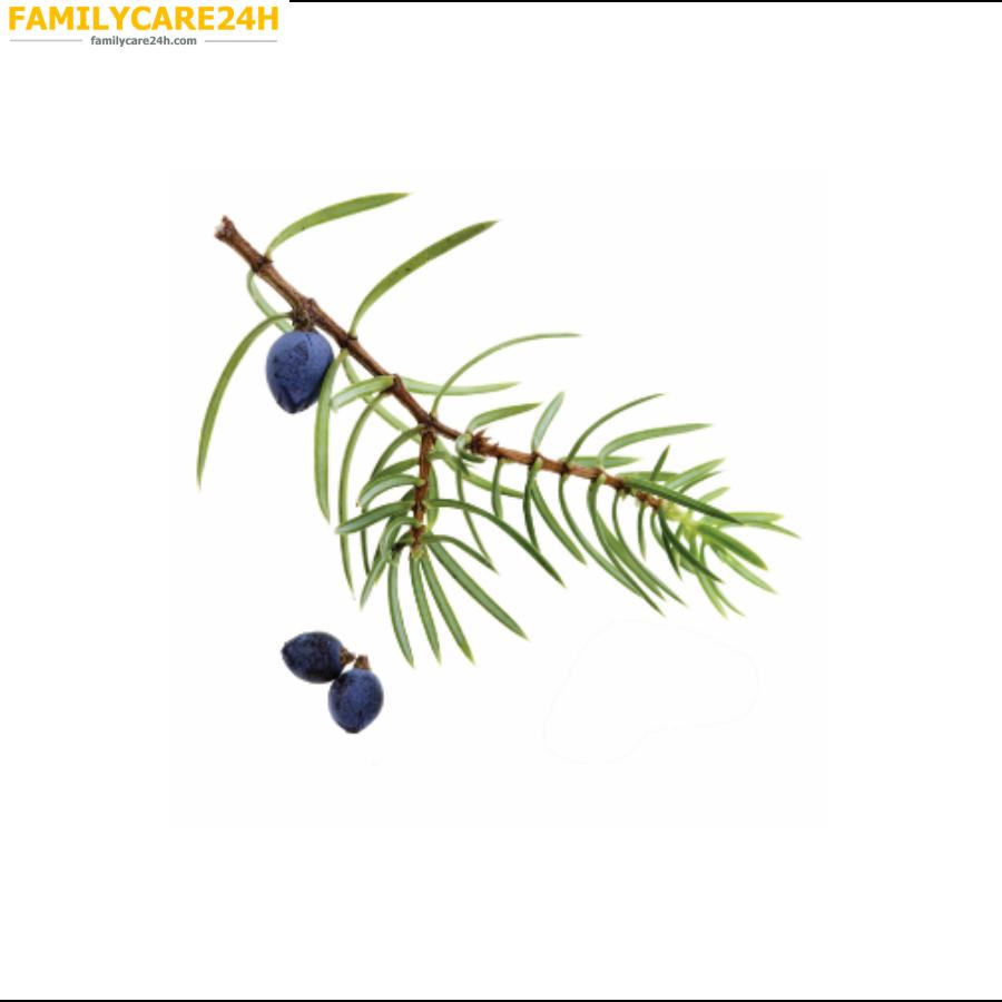 Juniper Berry - Quả cây Bách xù